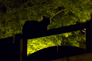 cat at night by Thomas Euler https://flickr.com/photos/thomaseuler/3656508113 shared under a Creative Commons (BY-SA) license